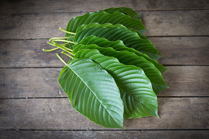 Kratom Dosage: A Complete Guide for Beginners 1