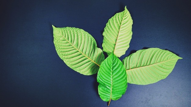 Unbelievable Facts About White Sumatra Kratom
