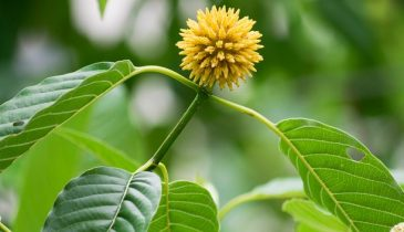What Are the Features of the Best Kratom for Anxiety?