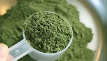 Kratom Powder Dosage: Recommendations and Other Information