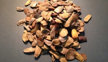 Be Educated About Akuamma Seeds: the Positive and Negative Effects